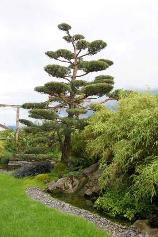 Bonsai im Garten