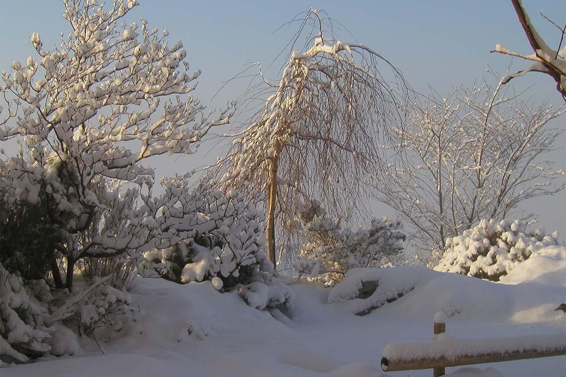Winterschnitt